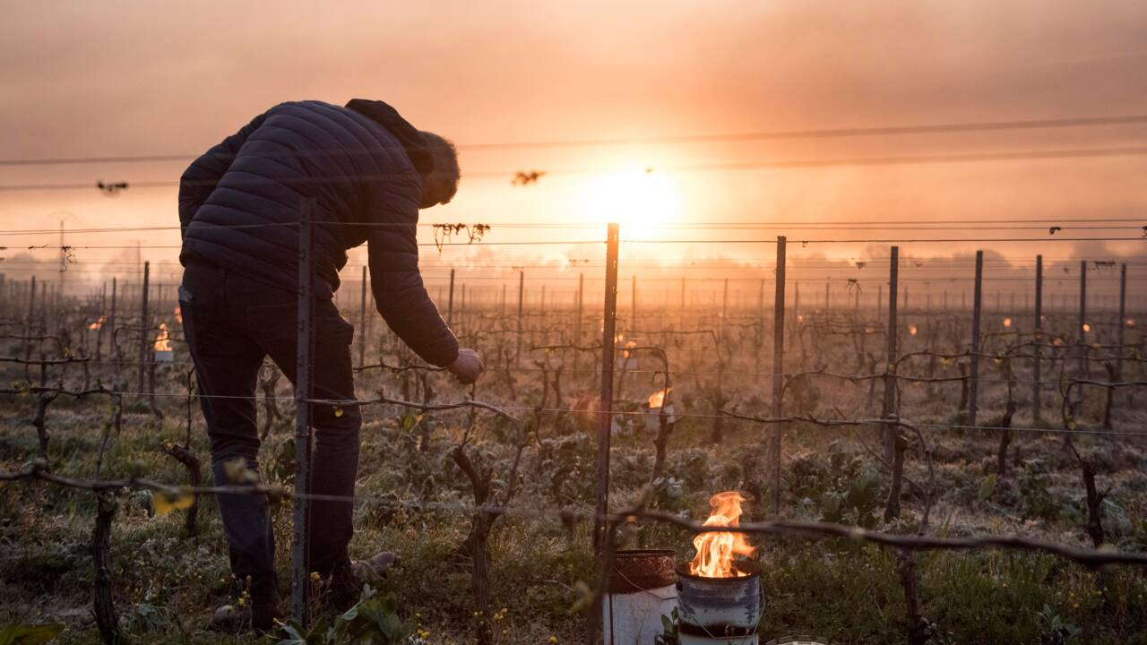 """Gel: """"la plus grande catastrophe agronomique"""" du siècle"""