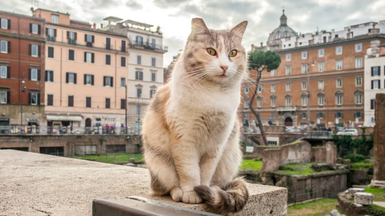 Gattara, sprezzatura, slampadato… 12 mots italiens intraduisibles