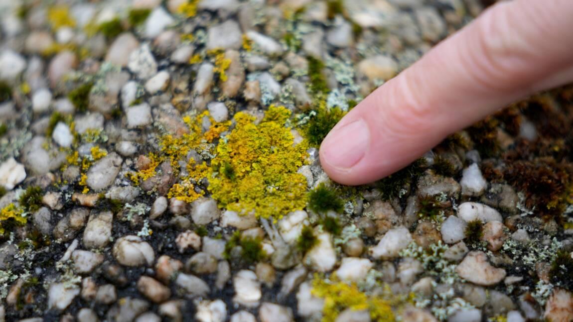 Les lichens, sentinelles de l'environnement et réservoir méconnu de molécules à potentiel médical