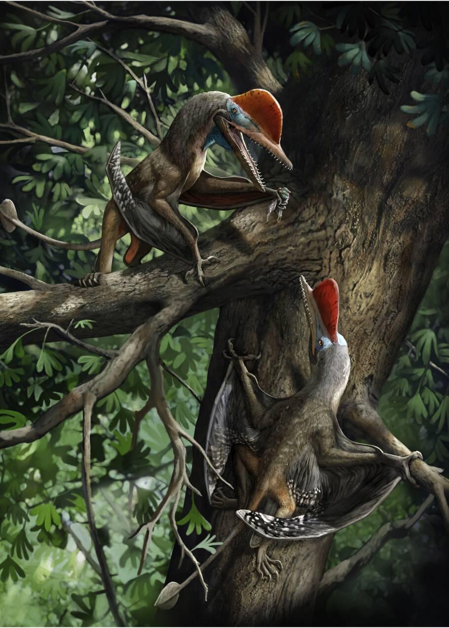 Un ptérosaure de 160 millions d'années livre le plus ancien exemple de pouce opposable