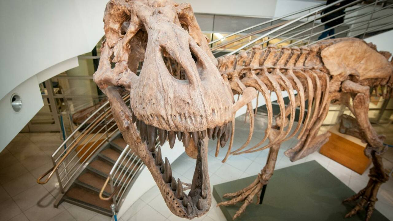 Combien de Tyrannosaurus rex ont-ils existé sur Terre ?