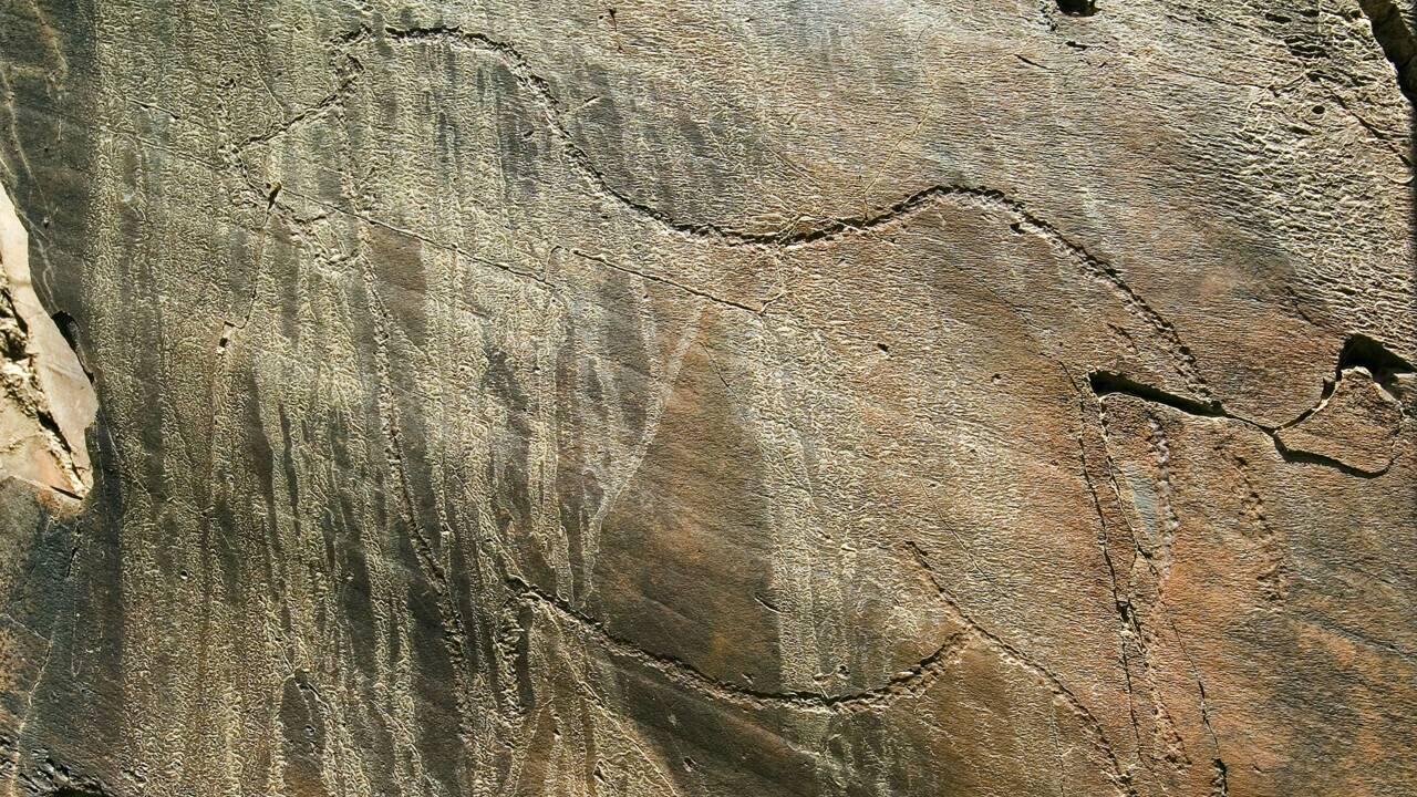 """Portugal : """"Au paléolithique, dans la vallée de Côa, les artistes gravaient leurs œuvres à la vue de tous"""""""