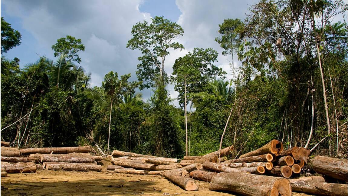 """ForestLink, une appli """"sentinelle"""" au secours des forêts de la planète"""