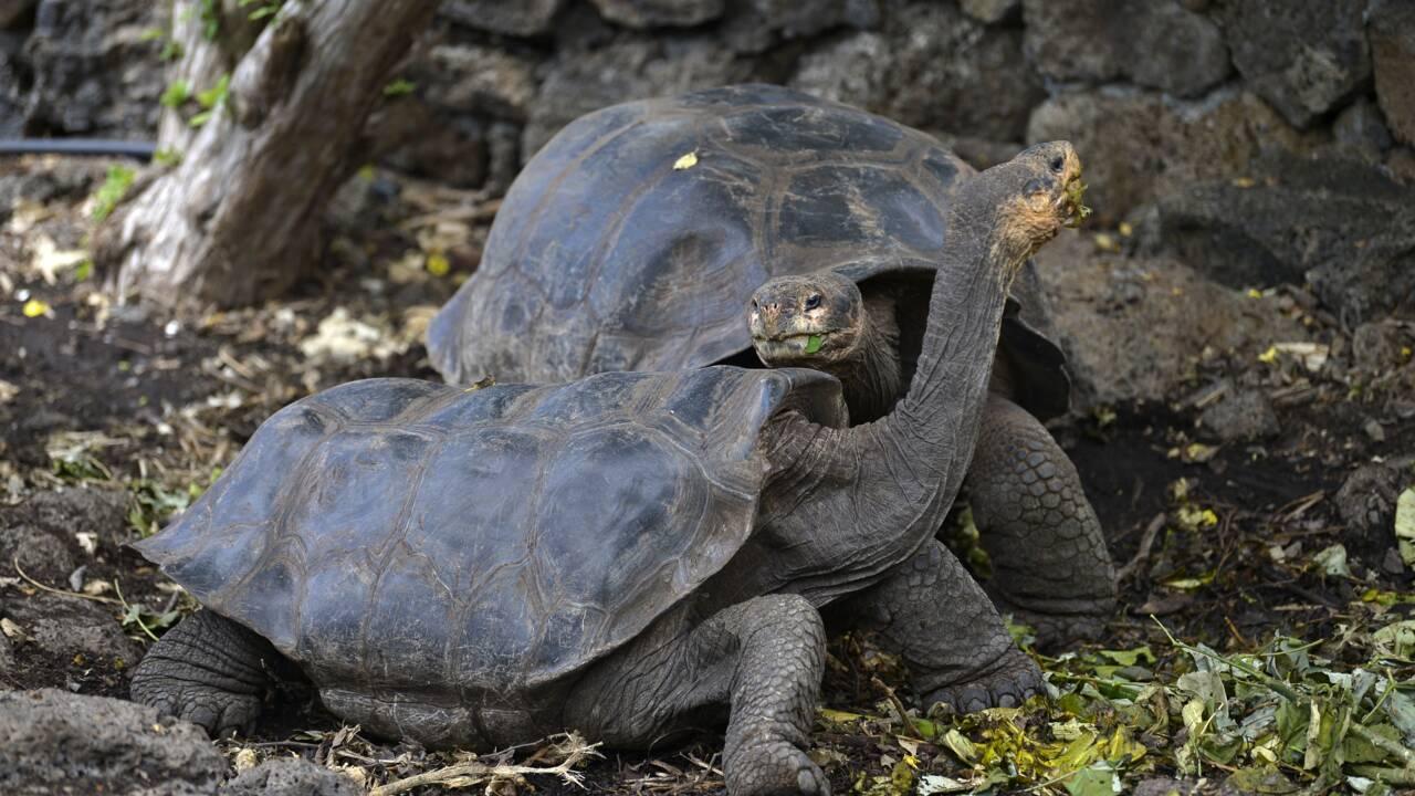 Les Galapagos à l'abri du Covid, mais tourisme et science à l'arrêt