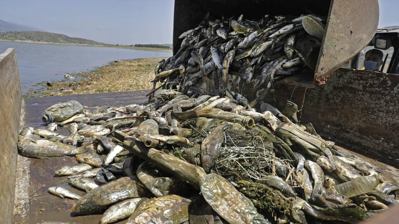 Au Liban, des tonnes de poissons morts dans un lac pollué