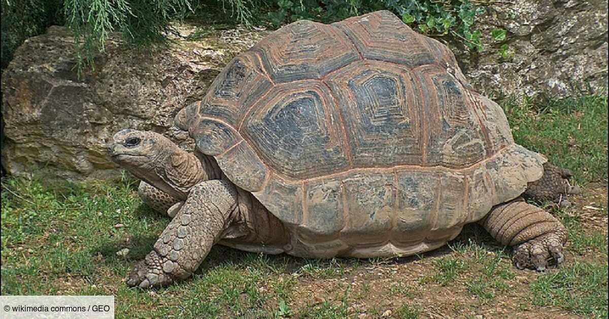 Quel est l'animal qui vit le plus longtemps ?