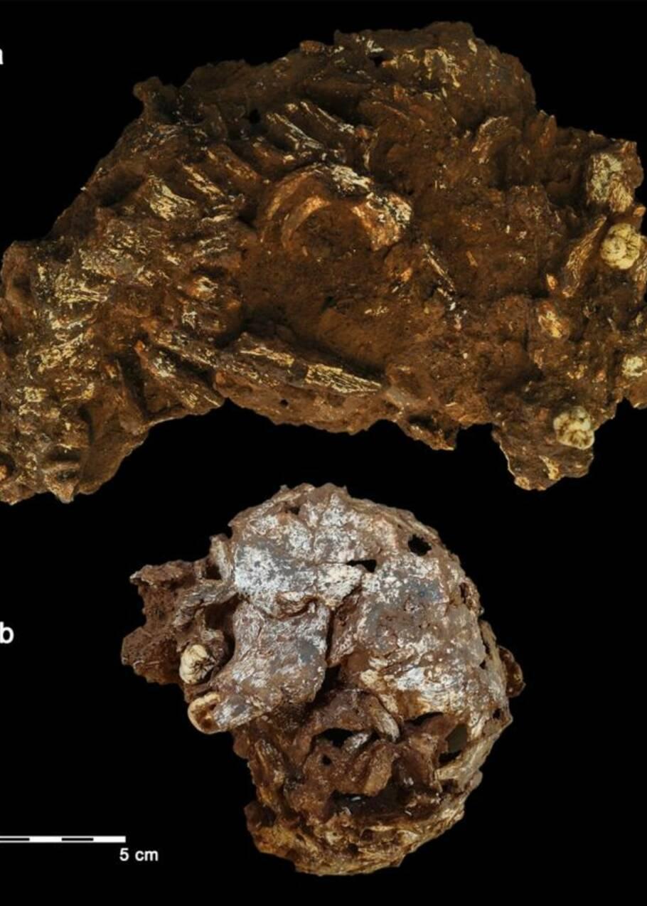 Ci-gît l'enfant Mtoto : la plus ancienne sépulture d'Afrique dévoile ses secrets