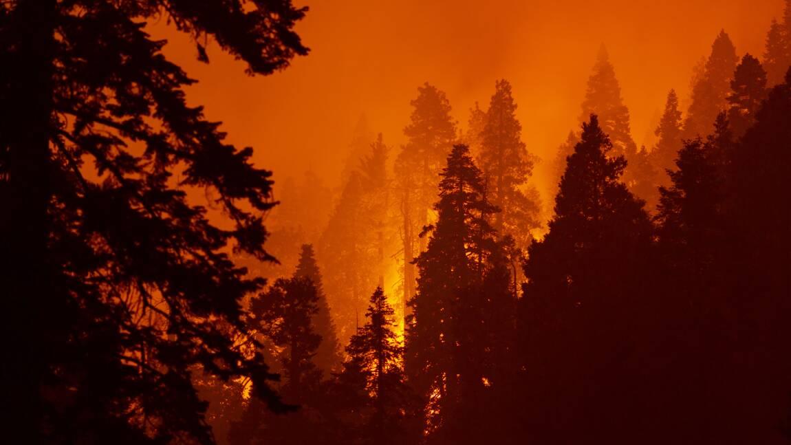 En Californie, un séquoia continue à se consumer après un feu de forêt de l'été 2020