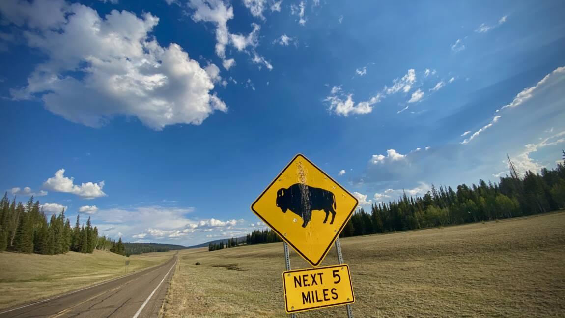 Plus de 45.000 candidats pour tuer 12 bisons dans le parc du Grand Canyon