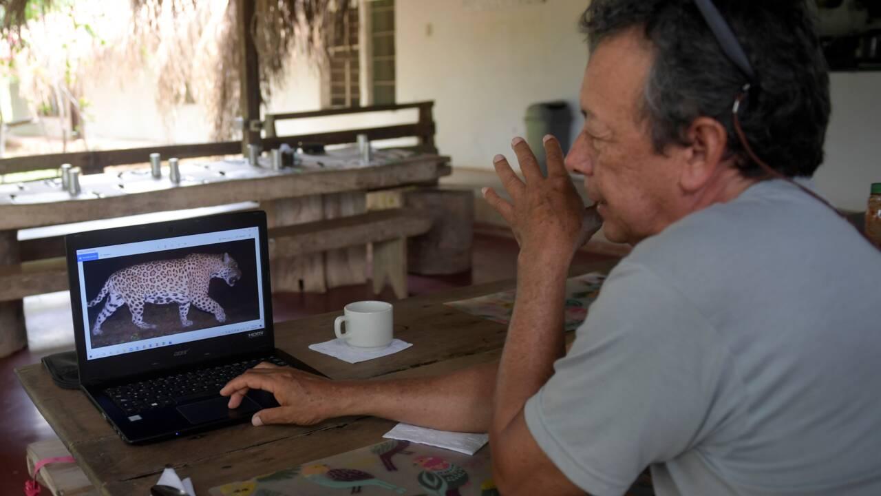 En Colombie, un éleveur de bétail a choisi de cohabiter avec les jaguars