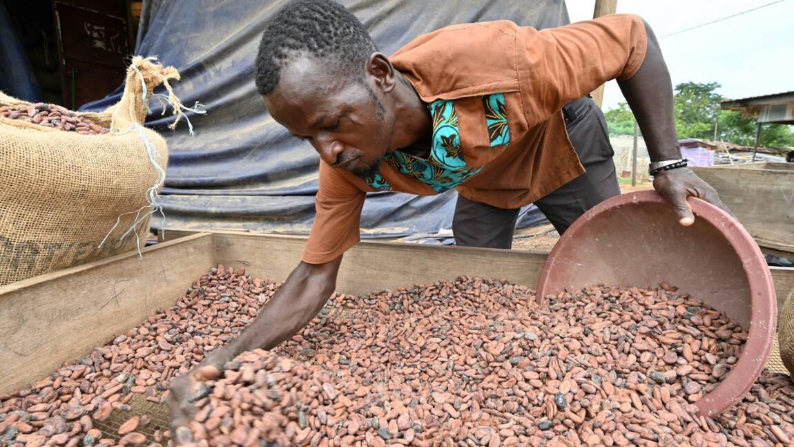 A M'Brimbo en Côte d'Ivoire, le succès du cacao bio, meilleur et plus rentable