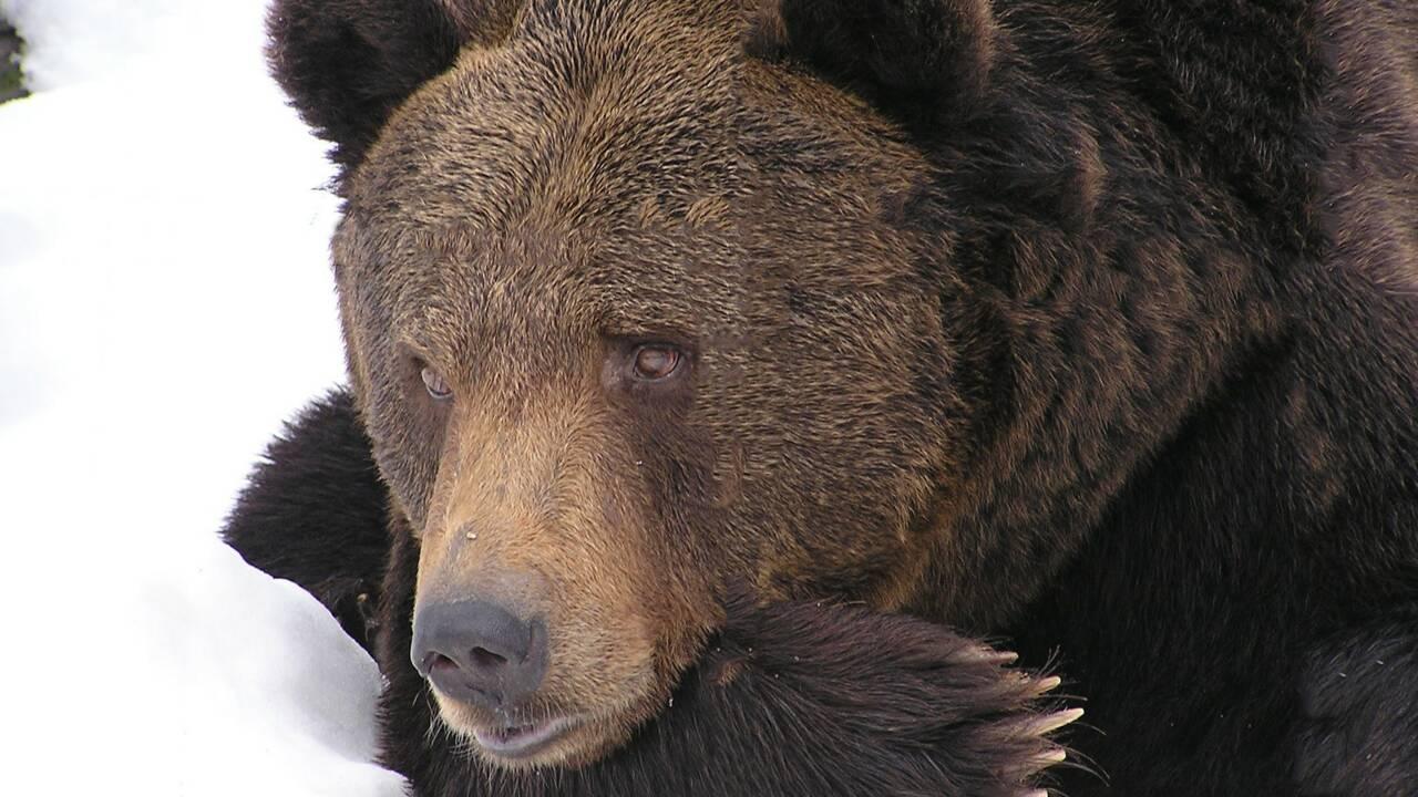 Hibernation : quand les animaux mettent leur vie entre parenthèses