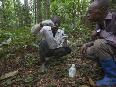 Au Cameroun, sur la piste des nouveaux virus