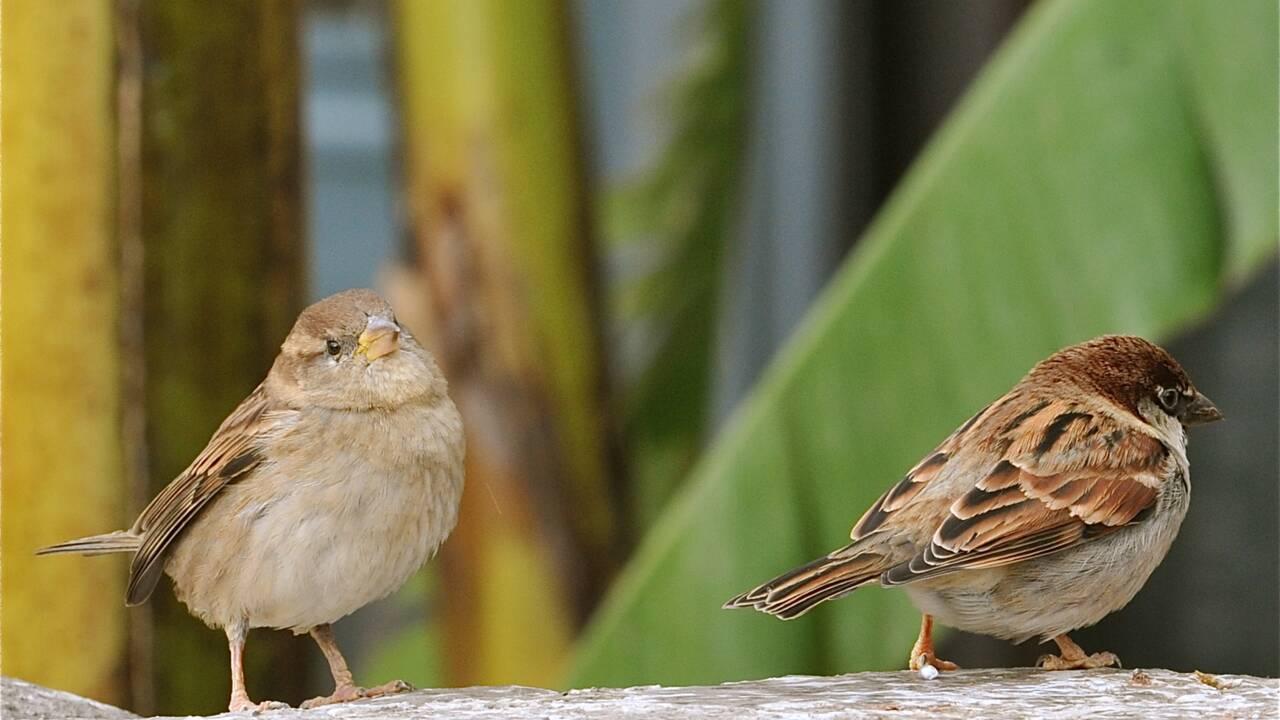 Combien y a-t-il d'oiseaux sur Terre ? Une étude répond