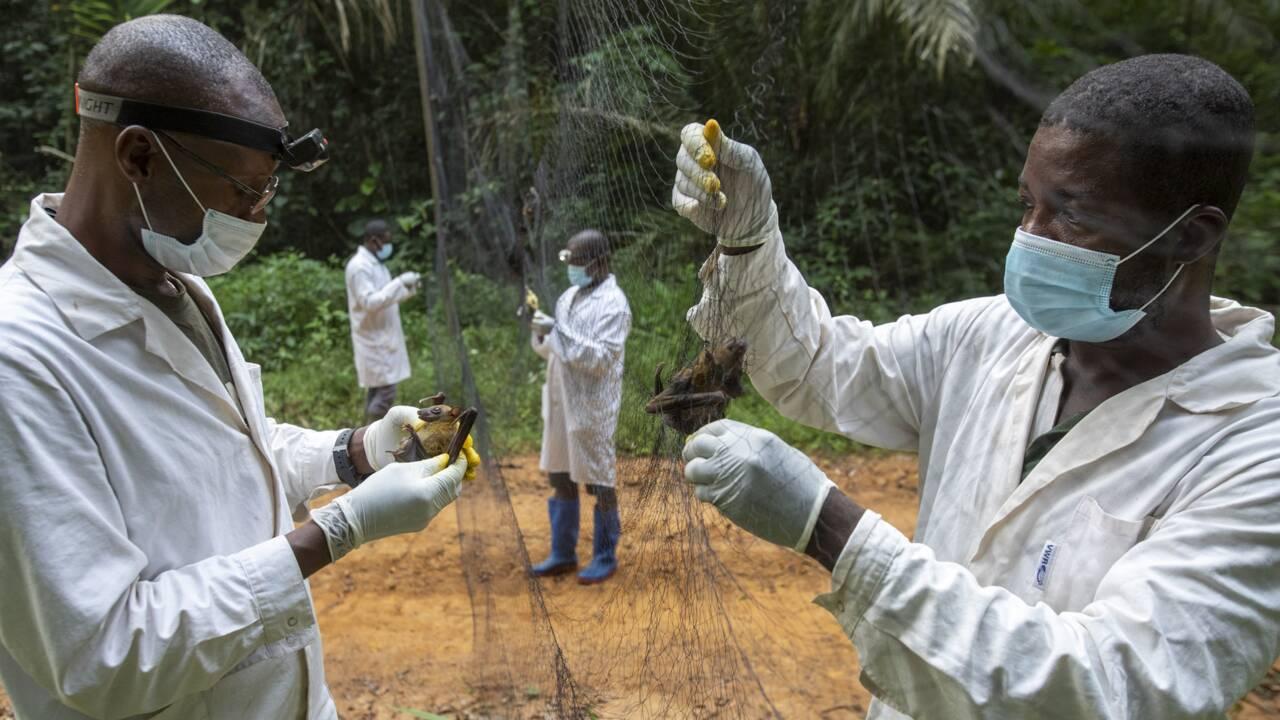 Au Cameroun, avec les traqueurs de nouveaux virus