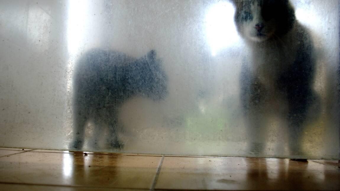 Maltraitance animale: 30 parlementaires et des ONG demandent au Sénat de légiférer