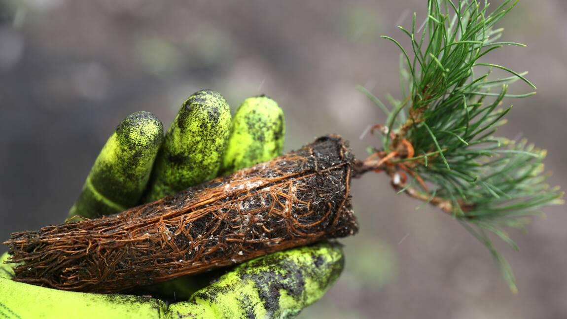 Les champignons ont aidé les plantes à conquérir les terres émergées il y a 450 millions d'années