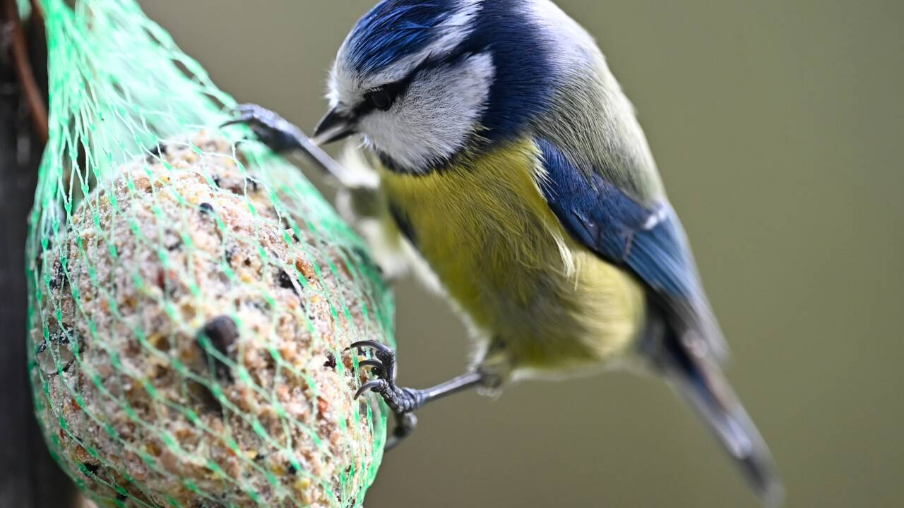 Le déclin des oiseaux des villes et des champs se confirme
