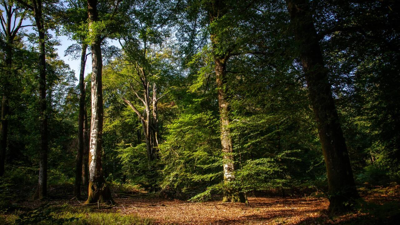 30 forêts exceptionnelles à découvrir en France cet été selon l'ONF