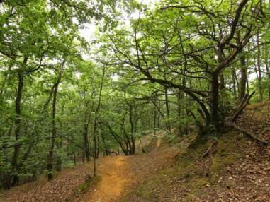 10 forêts exceptionnelles que l'ONF vous invite à découvrir cet été