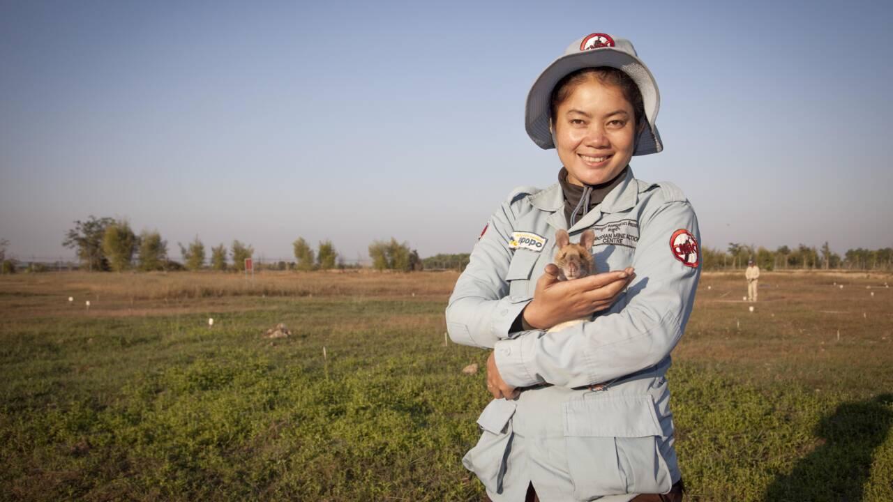 Magawa, le rat géant médaillé pour avoir détecté des mines prend sa retraite au Cambodge