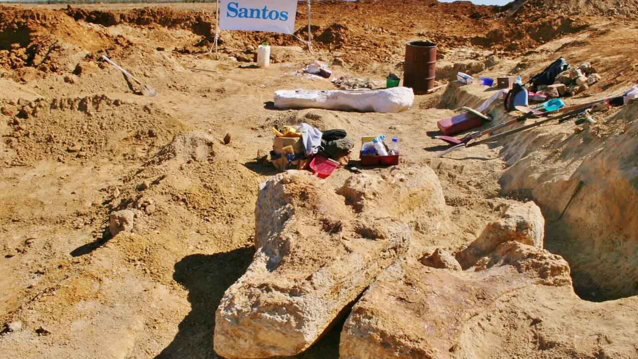 Australotitan, le plus grand dinosaure jamais exhumé en Australie