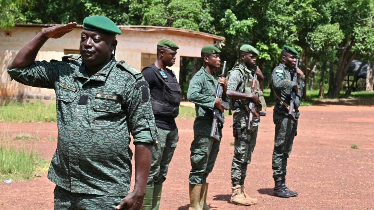 La forêt de la Téné, ultime rempart contre la déforestation en Côte d'Ivoire