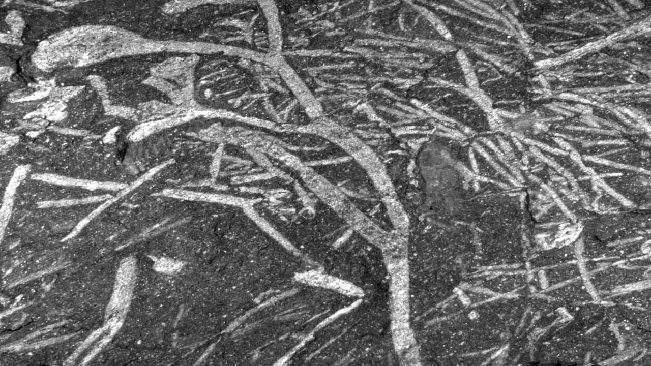 Découverte des plus anciens fossiles de plantes du continent africain
