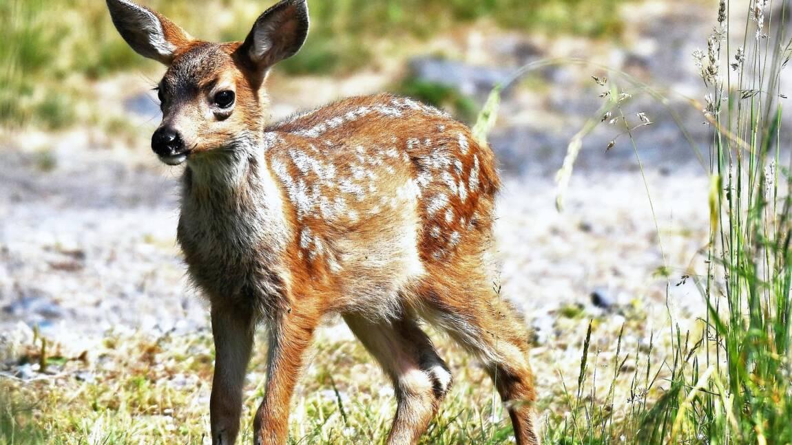 L'oeuvre de Felix Salten, le père viennois de Bambi, sort enfin de l'ombre