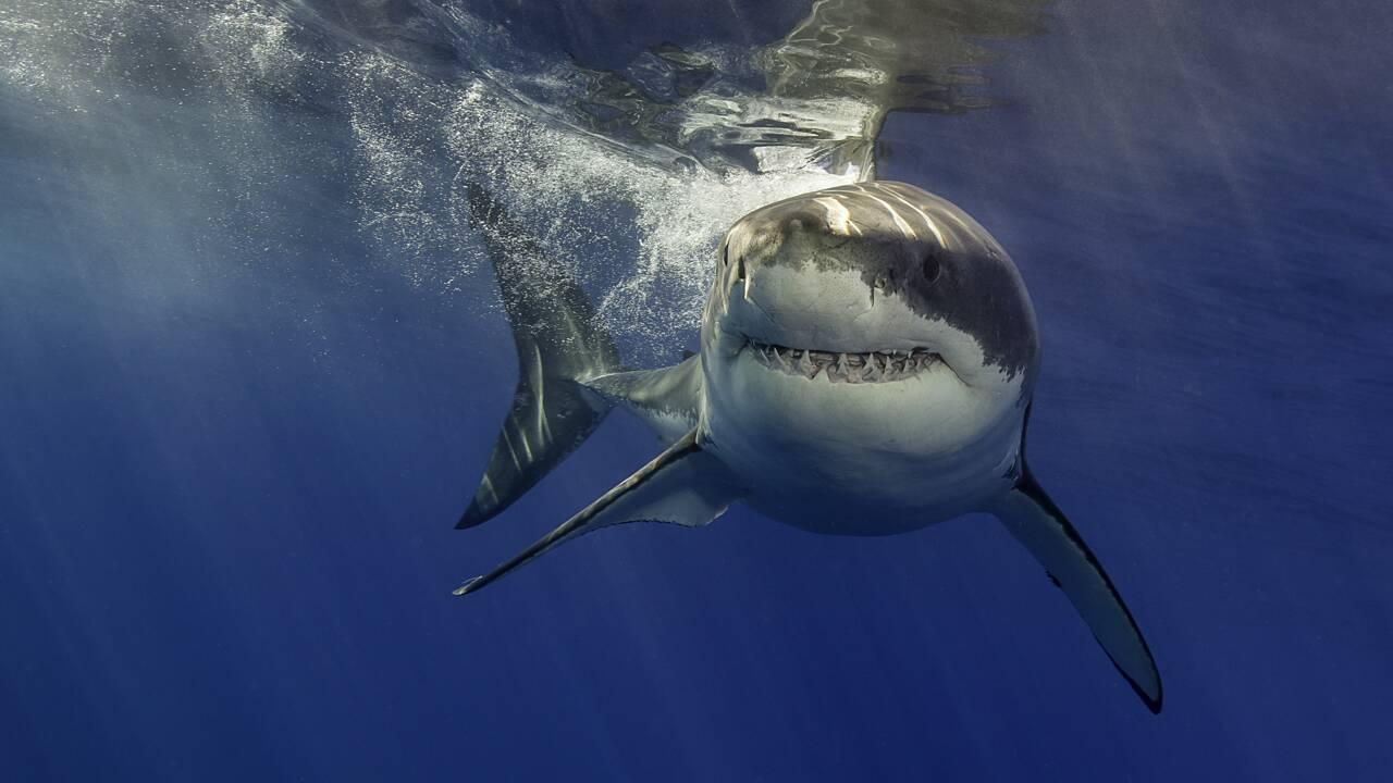 Quels sont les requins les plus dangereux du monde ?