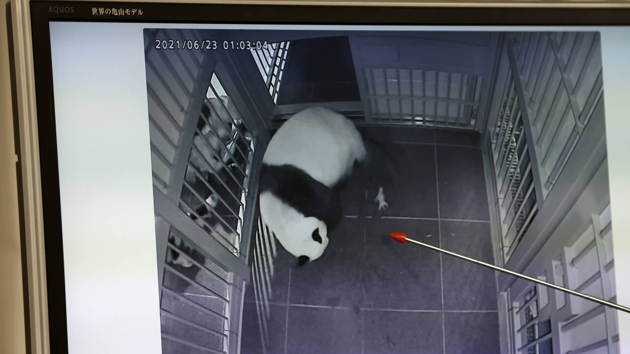 Naissance rare de jumeaux pandas dans un zoo de Tokyo