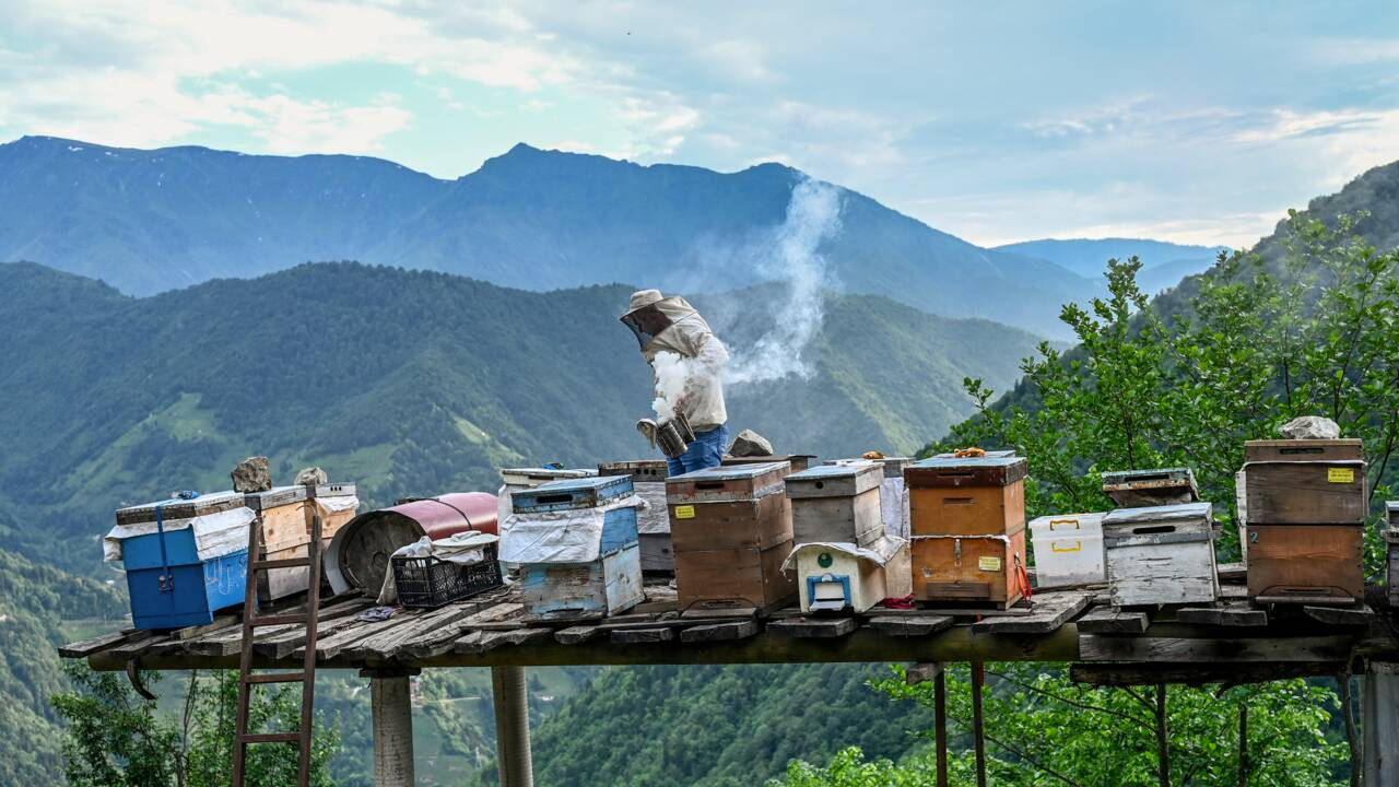 Faut-il donner une valeur économique à la nature pour mieux la protéger ?
