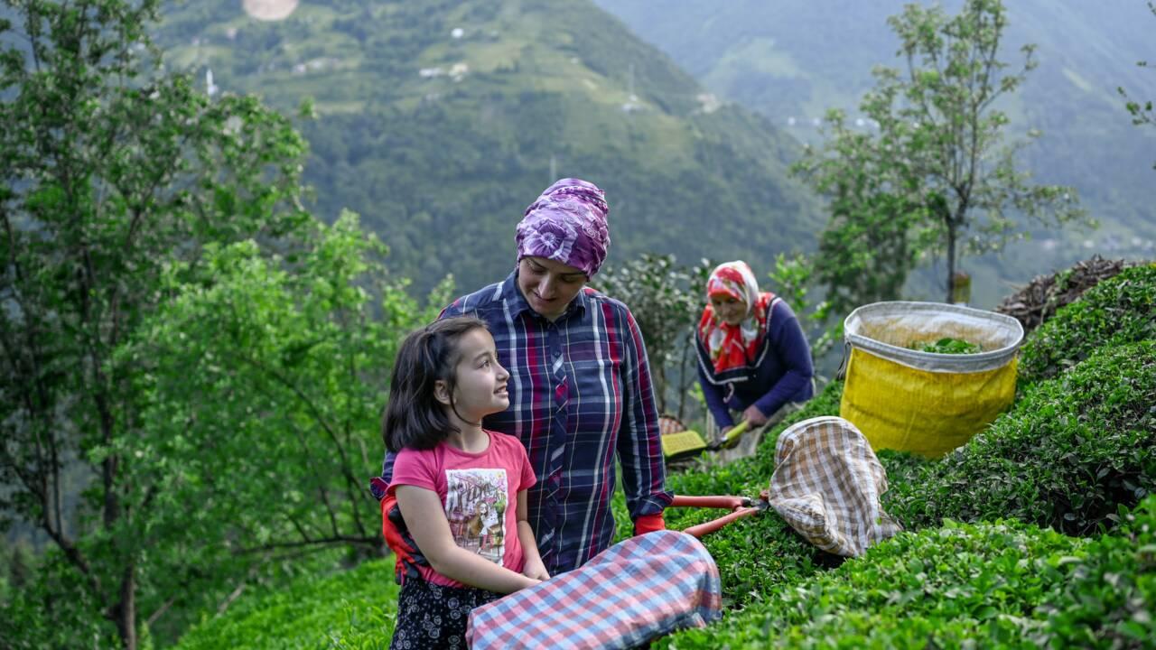 Turquie : des villageois défient Erdogan pour protéger la forêt