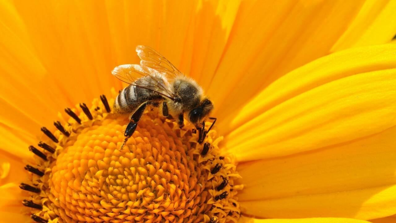 Toulouse : des abeilles et des oiseaux utilisés pour détecter la pollution