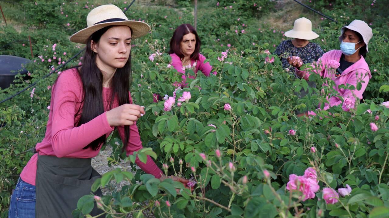 A Chypre, les plantes aromatiques attirent de nouveaux touristes