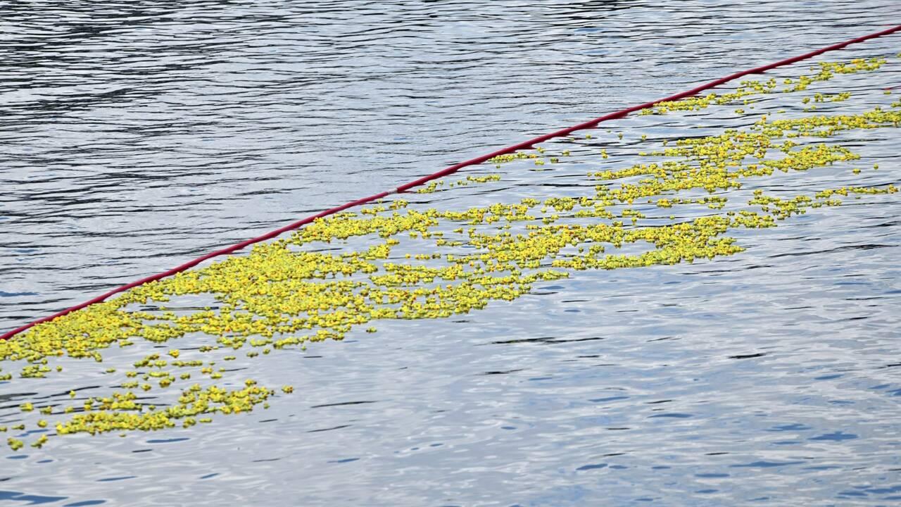 Un lâcher de canards en plastique provoque l'agacement des pêcheurs dans l'Oise