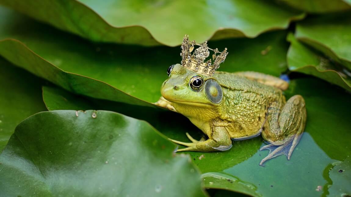 La grenouille, mal-aimée des contes et légendes