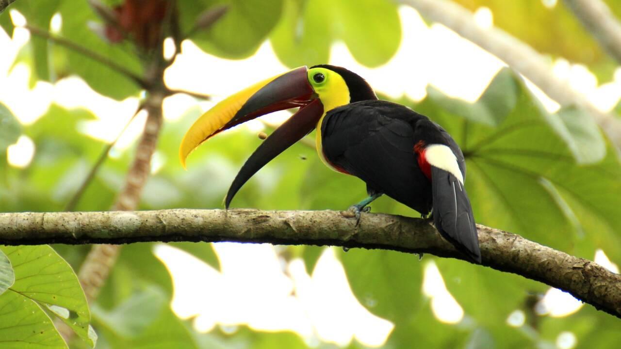 Voyager au Costa Rica : quelles sont les mesures et les modalités à connaître ?