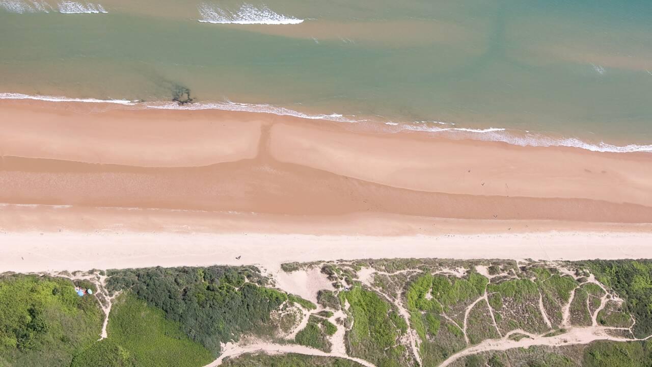 """""""La plage est l'un des écosystèmes les plus riches et l'un des milieux les plus rudes de la planète"""""""