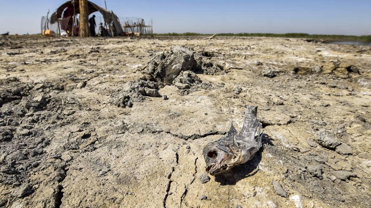 """Le rapport du Giec sur le climat est """"l'avertissement le plus sévère jamais lancé"""""""