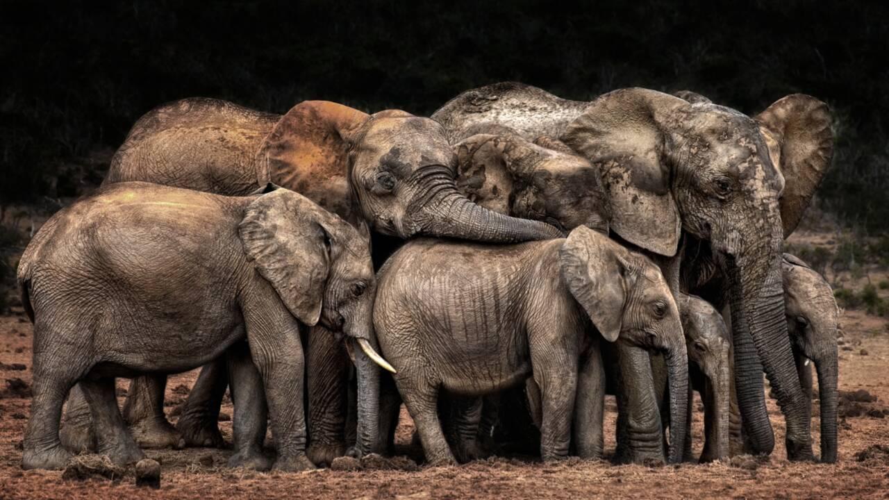 CEWE Award 2021 : découvrez les gagnants du plus grand concours photo au monde
