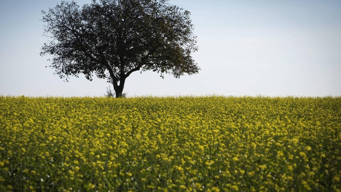 Climat: l'UE va planter 3 milliards d'arbres pour absorber ses émissions