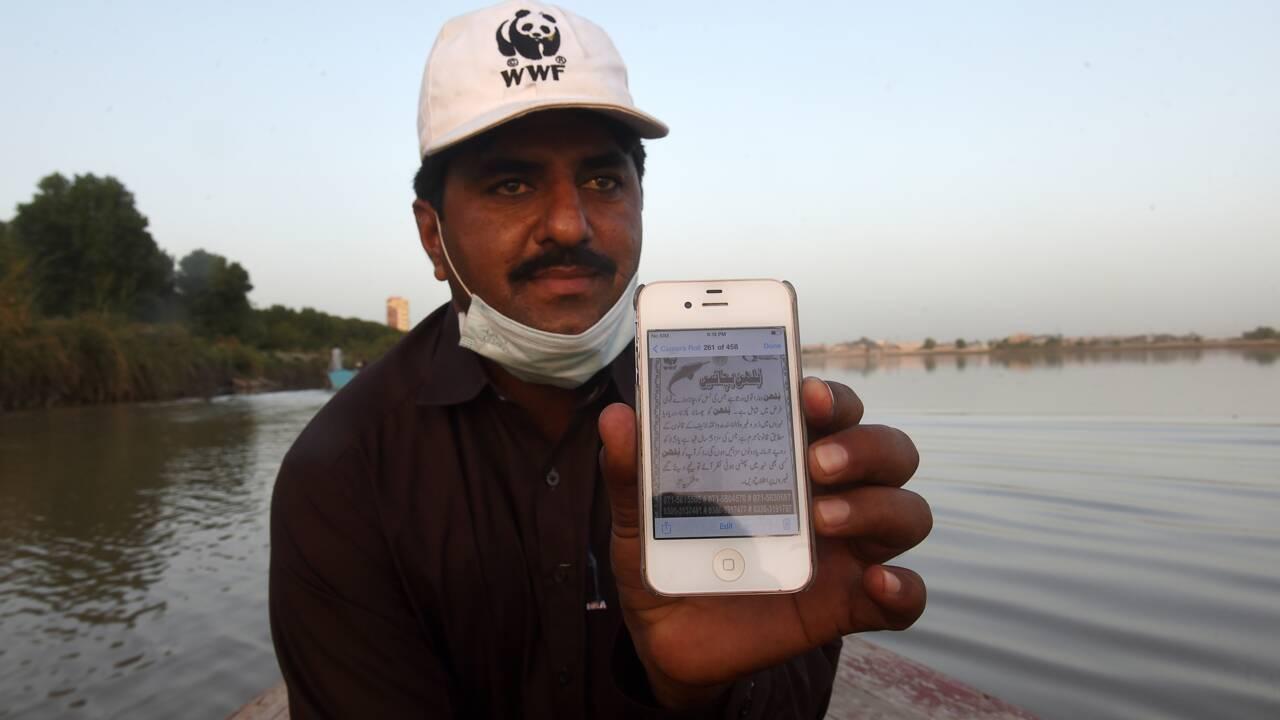 Pakistan : un nouvel espoir pour les dauphins menacés de l'Indus
