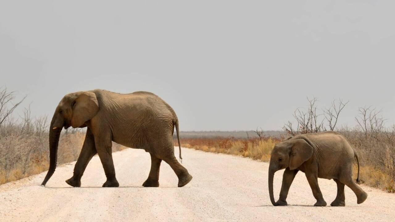 Club Med s'engage pour un tourisme animalier responsable