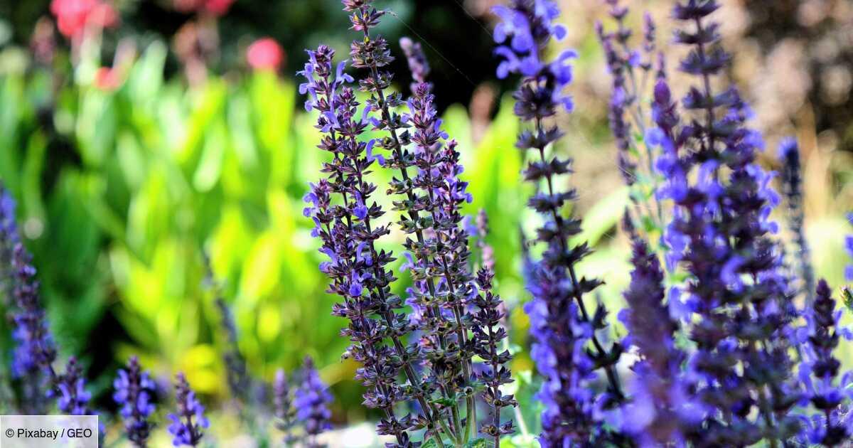 Notre sélection de plantes pour repousser les insectes