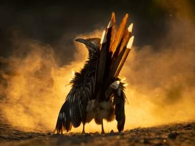 Audubon Photography Awards 2021 : les magnifiques photos d'oiseaux récompensées