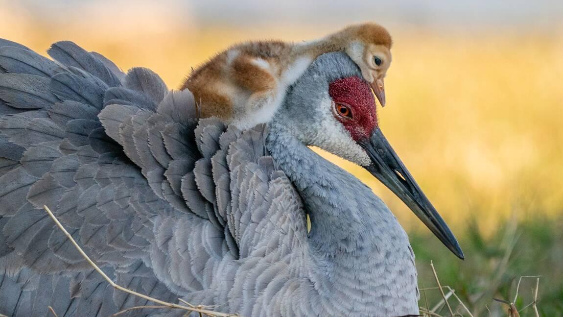 Les magnifiques photos d'oiseaux récompensées par les Audubon Photography Awards 2021