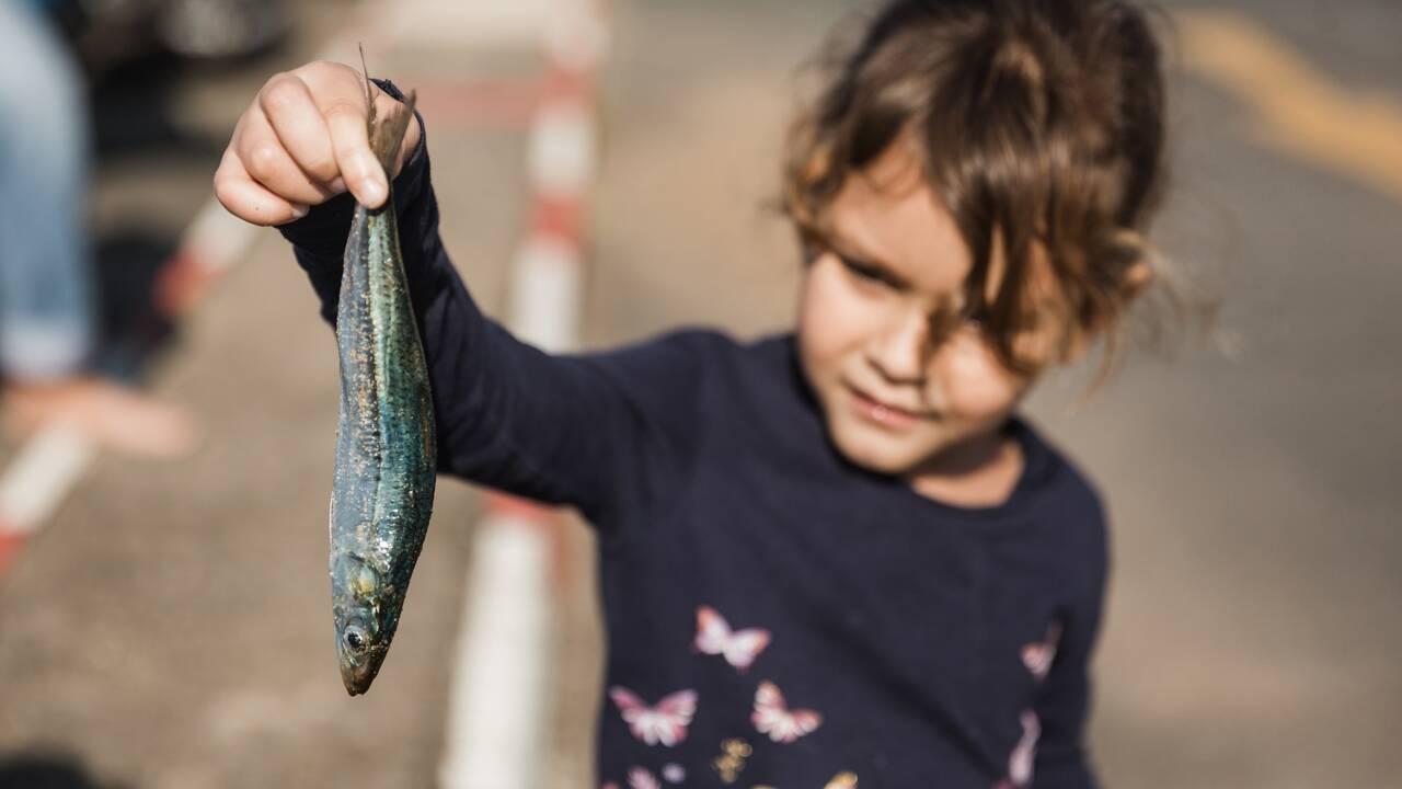 "La ""sardine run"", une fascinante course de sardines au large de l'océan Indien"