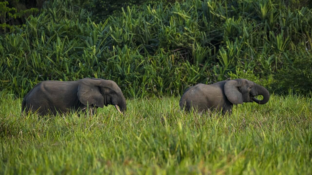 RDC : le parc national de la Salonga retiré de la liste du patrimoine mondial en péril