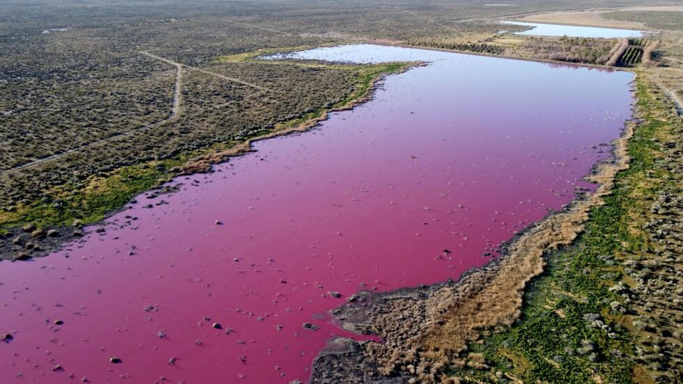 Une lagune vire au rose en Patagonie, polluée par des produits chimiques